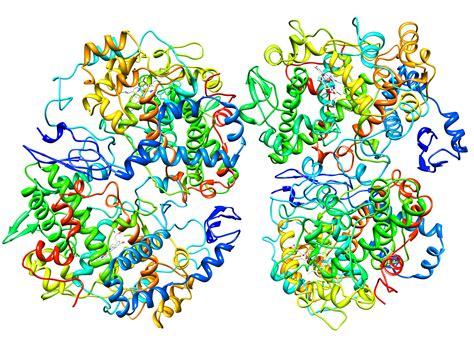 Carprofen Also Search For Prostaglandin Endoperoxide Synthase 2