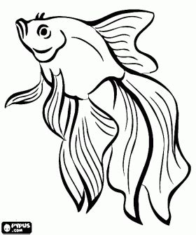 coloring pages for animals vbs blowfish coloring page fishes coloring pages