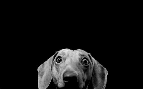 black and white dog wallpaper free black and white dog wallpaper mobile 171 long wallpapers
