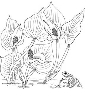 calla lily adult coloring coloring pages