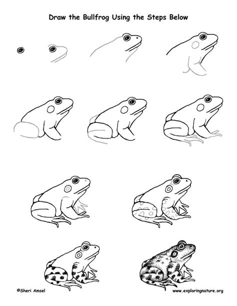 Real Steps To Resolution Relax With by Frog Bullfrog Drawing Lesson