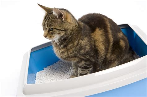 cat litter the scoop on litter mission valley news mission valley news