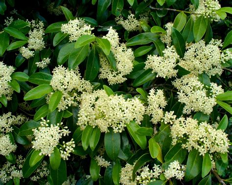 beautiful hawaiian shrub plants trinity by the sea 15 hawaii native plants perfect for landscaping total