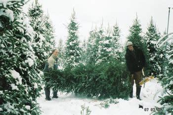 best christmas tree cutting experiences near sacramento