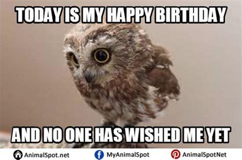 Happy Birthday Owl Meme - owl memes