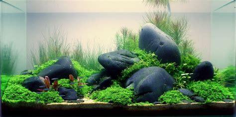 cara membuat pohon aqua scape cara membuat aquascape yang mudah dan murah