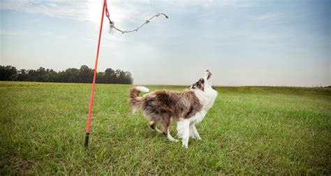 tetherball for dogs tether tug keeps your pup entertained living