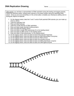 Dna Molecule And Replication Worksheet Answers by Dna Replication Worksheet