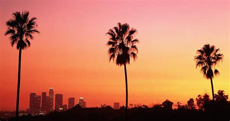 California Palm back to california palm trees on my mind literary hub