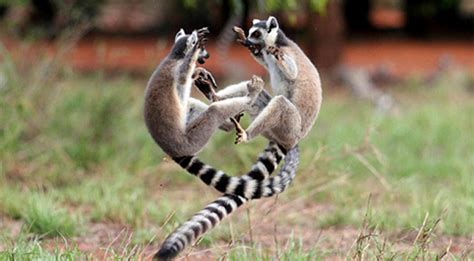animals fighting do you compete with your spouse or significant other