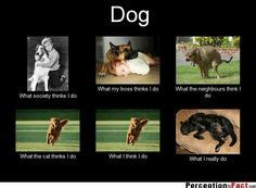 how do dogs think 1000 images about perception vs fact on perception do what and facts