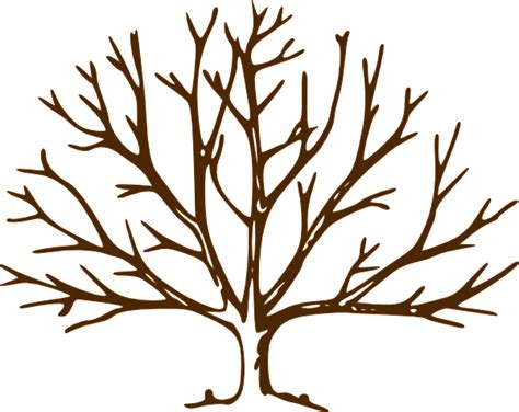 Leafless Tree Branch Outline by Bare Tree Clip At Clker Vector Clip Royalty Free Domain