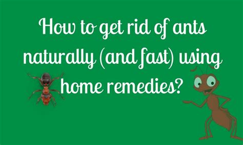 Bring Juice Into Your And Get Rid Of The Fats by How To Get Rid Of Ants Naturally And Fast Using Home