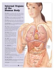 Location of human body parts free image wiring diagram amp engine