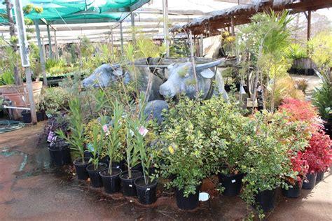 Garden Planters Melbourne by Plants Planter Boxes Melbourne Pots Galore