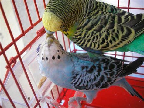 los pjaros mi primer 8408115502 informaci 243 n sobre aves la cr 237 a