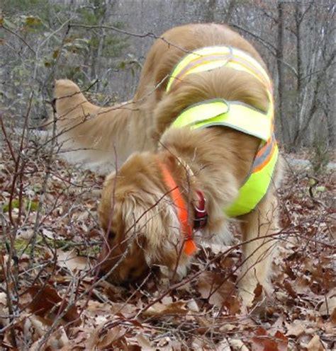 cadaver dogs cadaver dogs