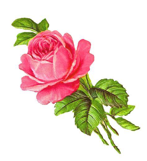 printable pink flowers antique images free pink rose digital download flower