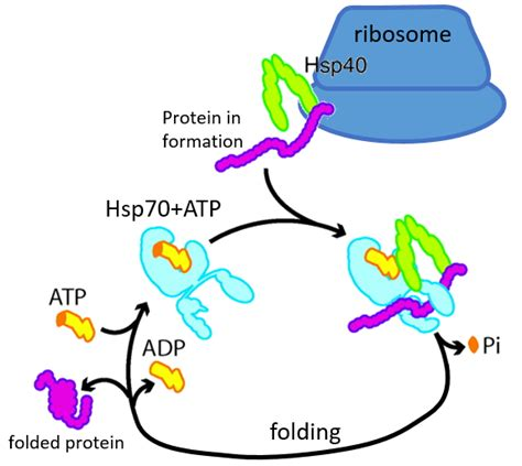 protein 3d structure chapter 5 3d structure of proteins borzuya