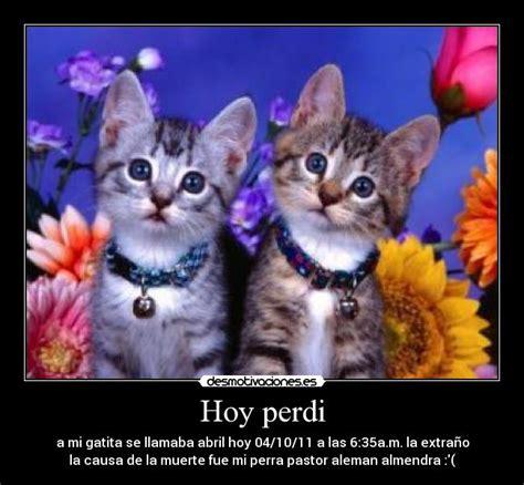 imagenes de te extraño gatitos imagenes de gatitos te amo imagui
