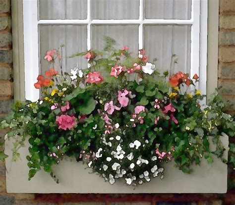 flowers window boxes window box of mixed flowers by elaine plesser