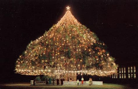 awesome trees 13 largest living xmas tree wilmington