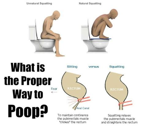 what foods make you go to the bathroom the best 28 images of what foods make you go to the