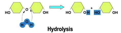 hydration synthesis difference between hydrolysis and dehydration synthesis