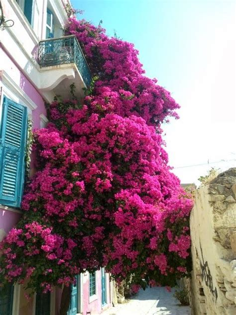 balconi fioriti in estate balconi fioriti