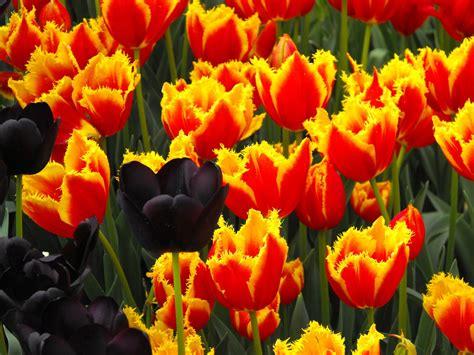Mukena Bali Tulip Dewasa Fit L free flowers stock photo freeimages