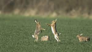 haus tiere haustiere hasen und kaninchen hasen und kaninchen