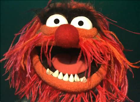 muppet characters animal images amp pictures becuo