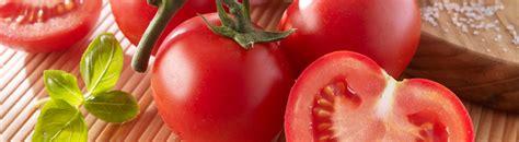 wann muss tomaten sã en tomaten pikieren tomaten pikieren und der