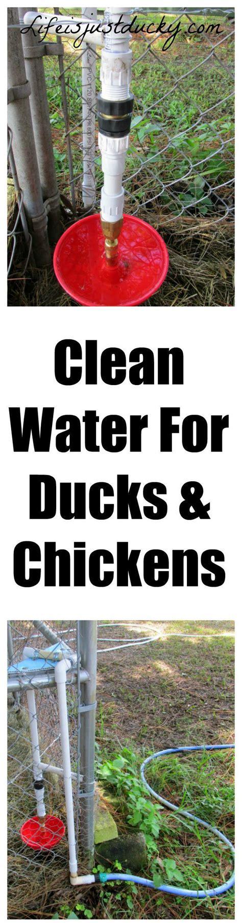 Duck Flower Detox by 25 Best Ideas About Fresh Water On Fruit
