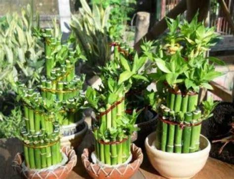 teks prosedur membuat tanaman hias cara membuat tanaman hias mini indoor dan outdoor