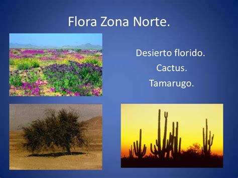 imagenes de flores de la zona norte ppt vanina dur 225 n