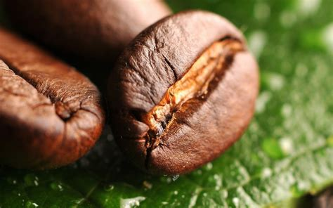 coffee seeds wallpaper hd wallpaper background wallpaper coffee beans wallpapers