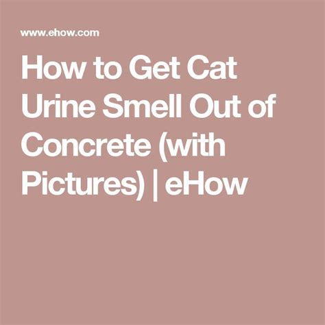 how to get cat urine smell out of concrete