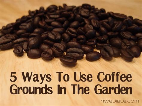 Coffee Grounds In Garden by 5 Ways To Use Coffee Grounds In The Garden Container