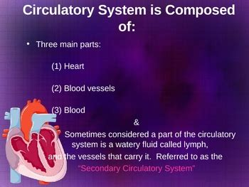 Circulatory System Powerpoint By Sandra Gibbs Teachers Circulatory System Powerpoint