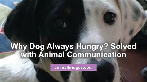 puppy always hungry behavior challenges archives animal bridges