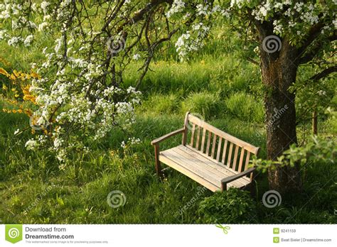 bench under tree park bench under blossoming tree royalty free stock images