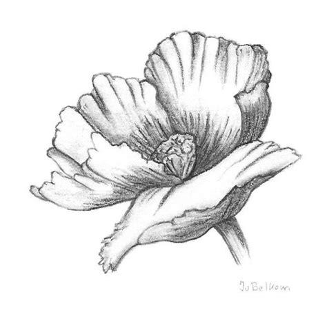 bloemen zwart wit tekening klaproos jos 233 van belkom