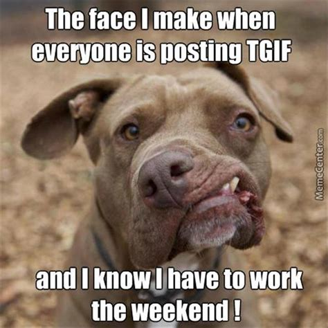 Weekend Dog Meme - funny pictures of the day 54 pics
