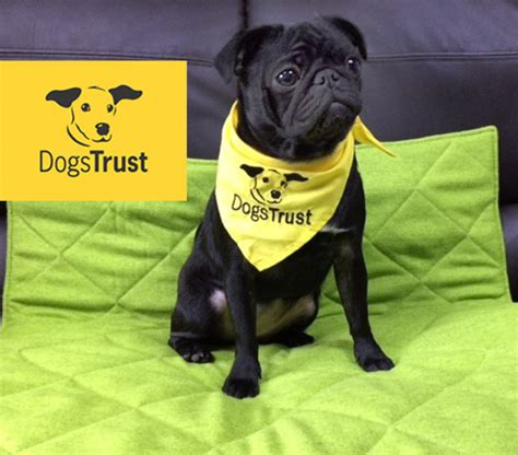 and the tr dogs dogs trust update