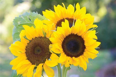perfect flowers  cutting gardens hgtv