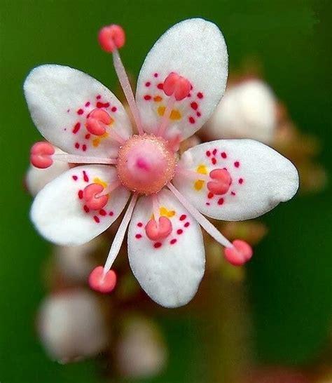 fiori rari oltre 25 fantastiche idee su fiori rari su