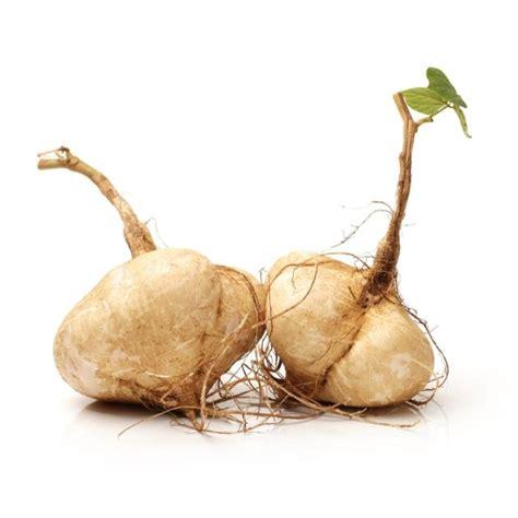 vegetables jicama is jicama the next superfood ny daily news