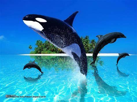 fishnet 143 fotos 216 beitr orca wallpapers wallpaper cave