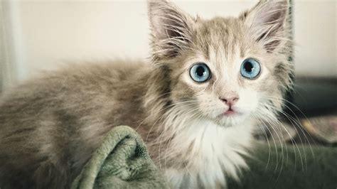 imagenes artisticas de gatos imagenes tiernas de perros y gatos felinos fondos de